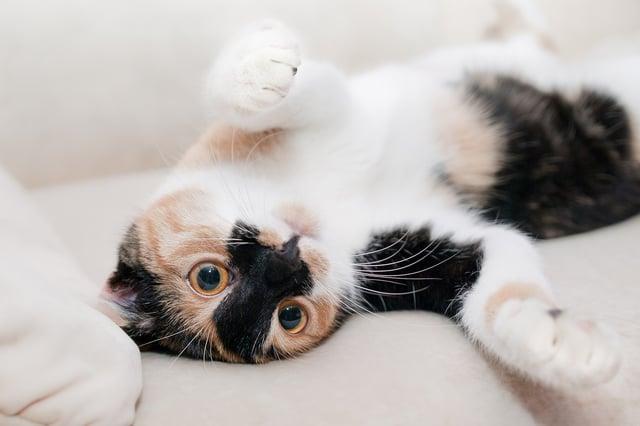 cat-649164_1920.jpg
